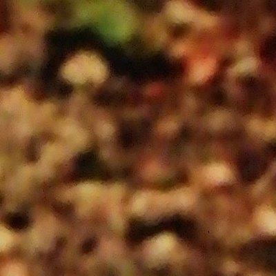 Profilbild von Naturboy