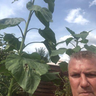 Profilbild von Gartendach