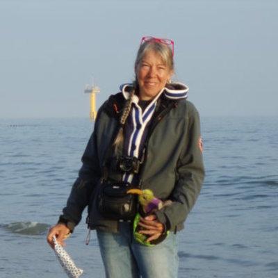 Profilbild von Seegang